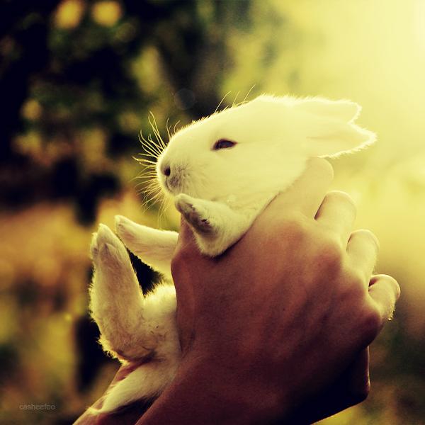 Bunny by CasheeFoo