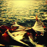 Stay here long autumn