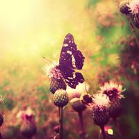 Butterfly by CasheeFoo