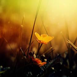Gold. by CasheeFoo