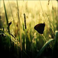 Little Black Butterfly
