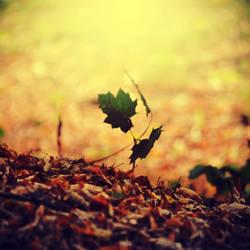 autumn is gone by CasheeFoo