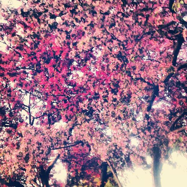 spring, spring II by CasheeFoo