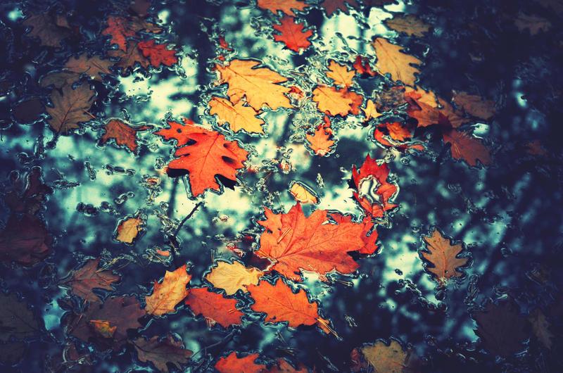 Falling leaves by CasheeFoo