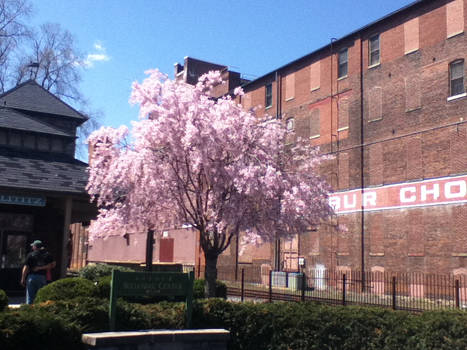 Pink tree next to chocolate factory