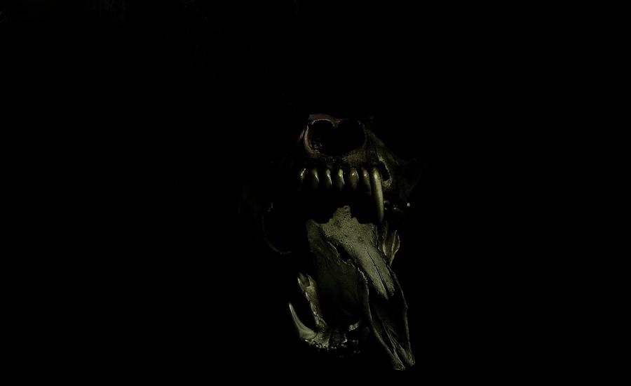 DeerMeet Wallpaper Dark By ShadowWolf6