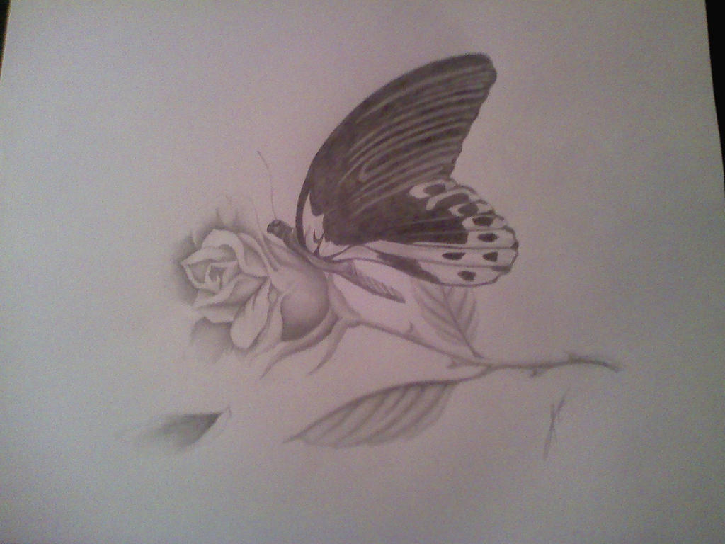 Butterfly and rose drawing - photo#20