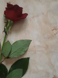 Rose Letter Stock II by Senzi