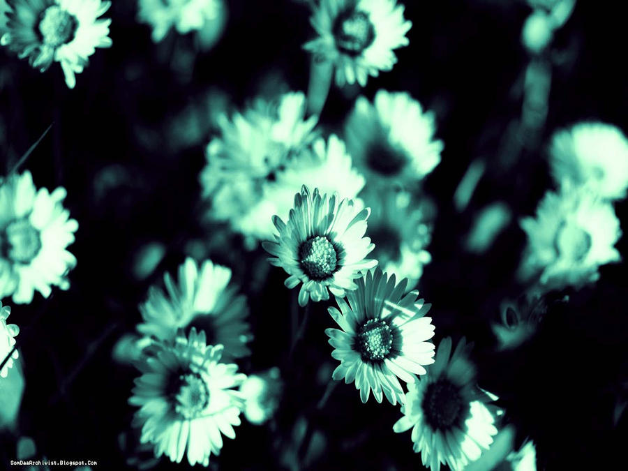 Monochrome Flowers by SomsThinking