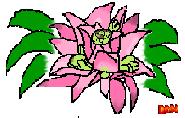Rain forest flower by Dawnfire2025