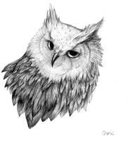 owl by Enife