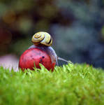 Snail by gorzkaczekoladka