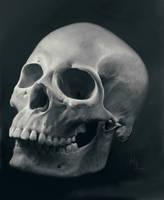 skull study by kynlo