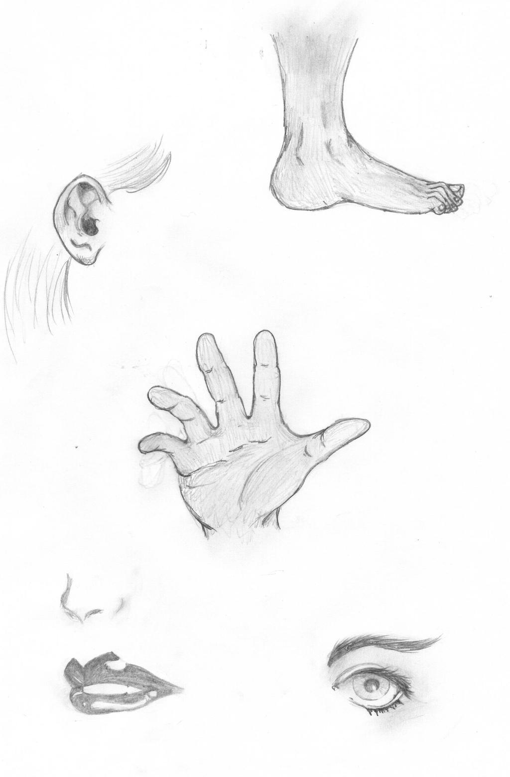 Sketching Body Parts By Freakysart On Deviantart