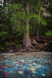 Avalanche Creek by Jacob-Routzahn