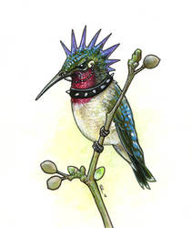 Punk Hummingbird