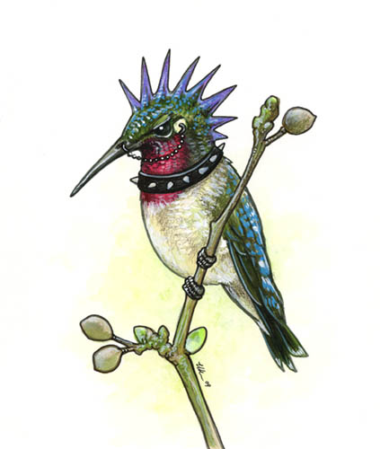 Punk Hummingbird by ursulav