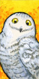 Teeny Tiny Snowy Owl by ursulav