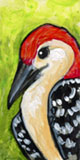 Teeny Red-Bellied Woodpecker by ursulav