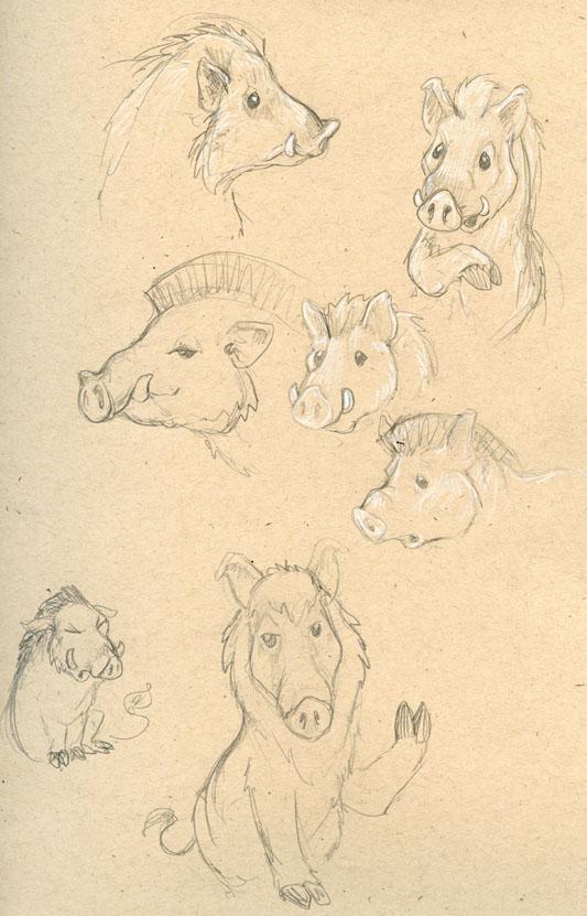 Boar Sketches