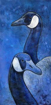 Blue Geese Study