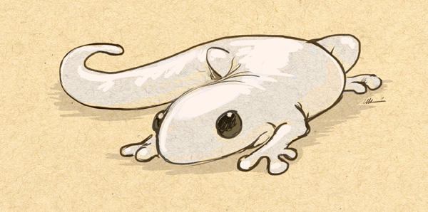 Newt Doodle