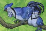 Blue Jayfowl