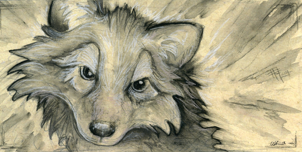 Canis by ursulav