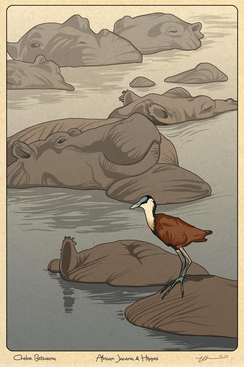 Jacana and Hippos by ursulav