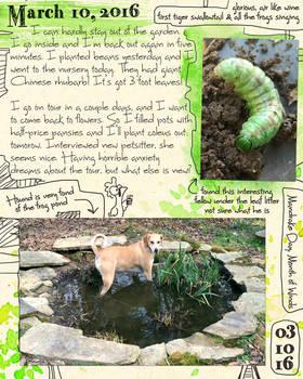 Dog In Frog Pond Journal