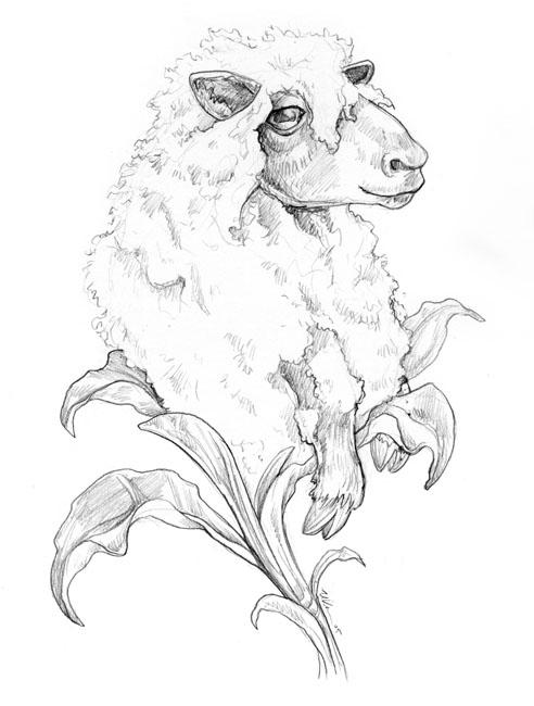 How to draw a realistic sheep