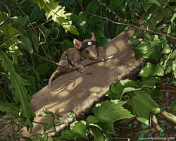 Afternoon Shadows by ursulav