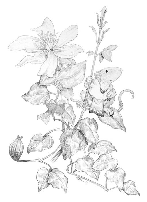 Clematis and Mouse by ursulav on DeviantArt