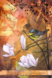 Magnolia Warbler by ursulav