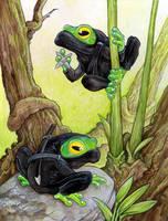 Ninja Frogs