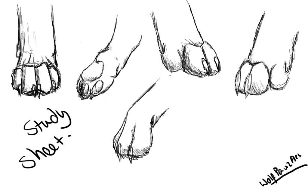 Wolf Back Paw Anatomy