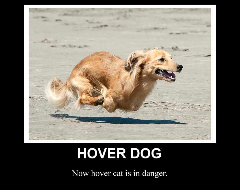 Image result for hover cat