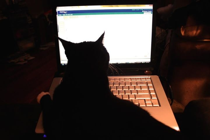 Prissy does MathXL homework by SuicuneLuver