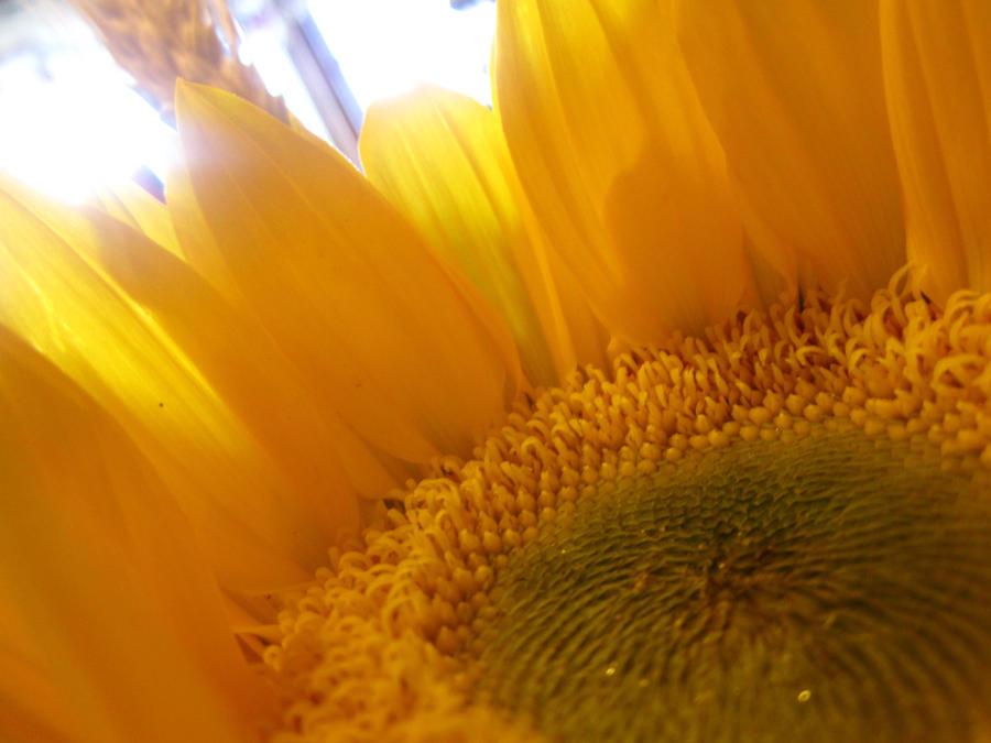 I Am The Sun by darkangel1518