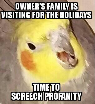 Birb Meme 654534828 on alarm clock wallpaper