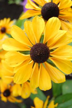 flower 2 - stock