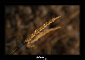 Autumn spike