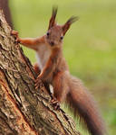 Do you have a nut for me?
