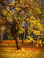 November leaves by starykocur