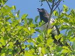 Voices of birds I