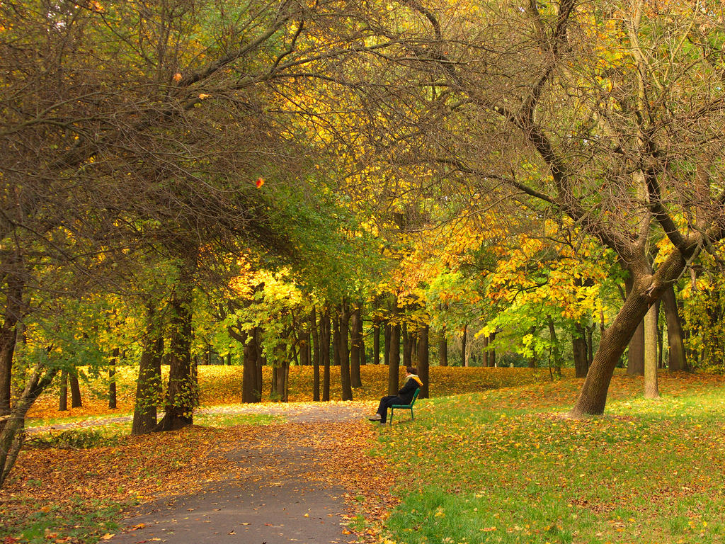 Under yellow leaves by starykocur