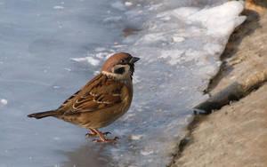 Winter birds III by starykocur
