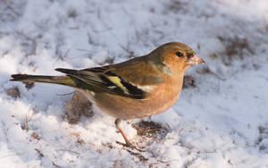 Winter birds IX by starykocur