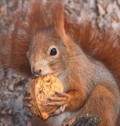 Portrait with walnut