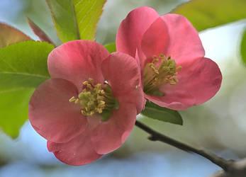 Springtime flowers V by starykocur